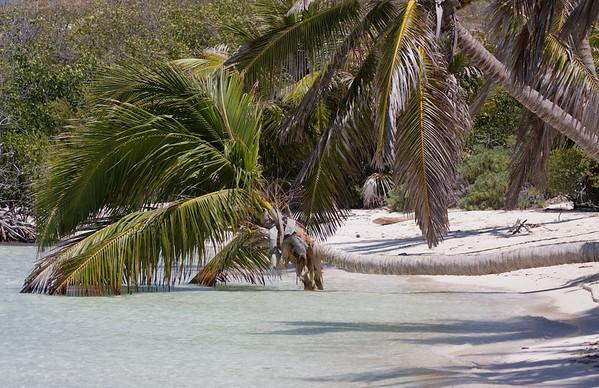 Beach on Isla Contoy