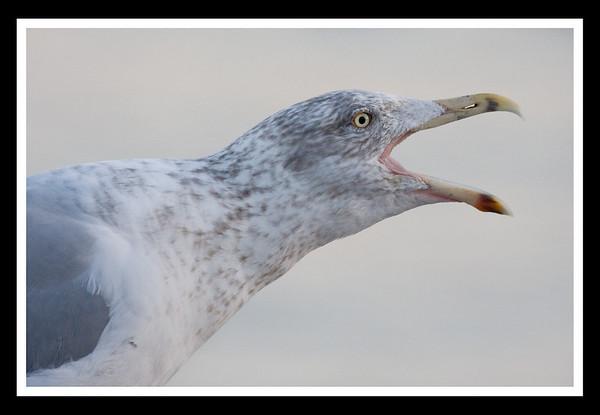 squalker 2