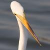 twisted egret
