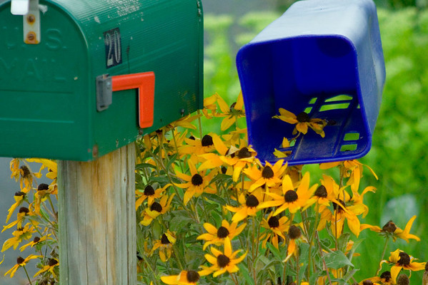 Flowers in the mail