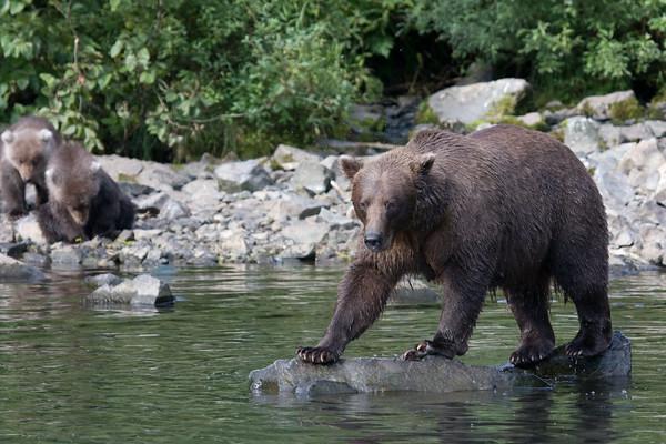 The fishing rock.  <br /> Wolverine Creek<br /> Redoubt Bay, Alaska