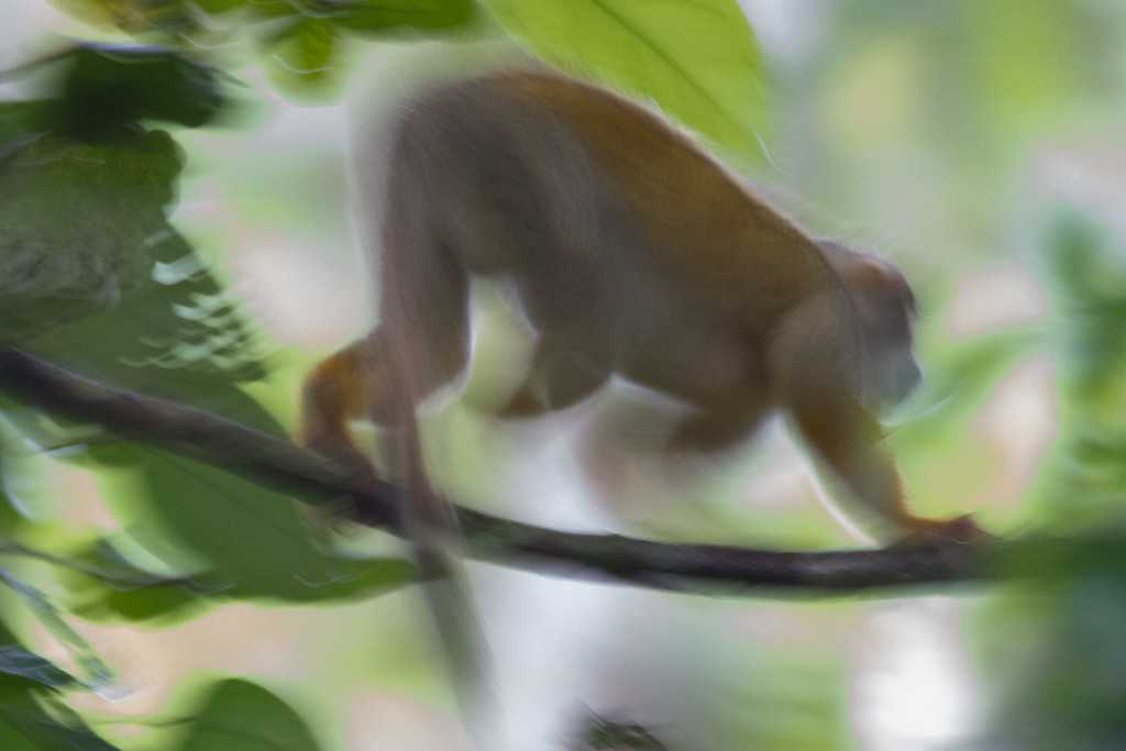 Monkey in motion