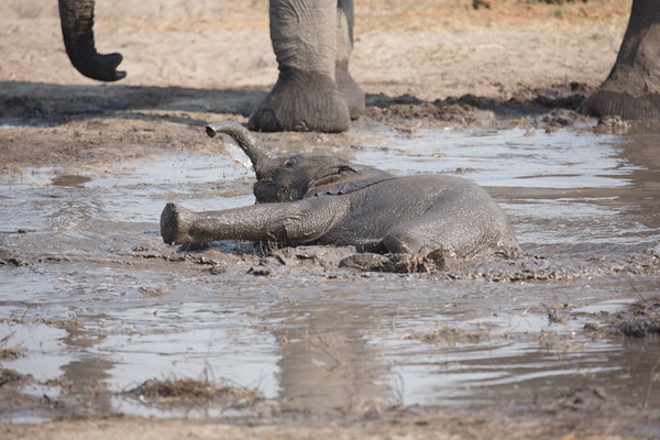 Fun at the watering hole