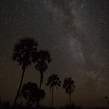 Milky Way with Palm tree silhouette
