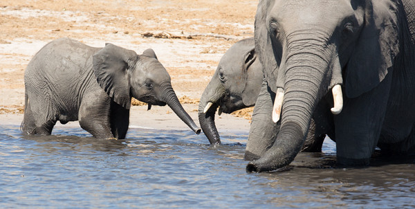 Junior at the water hole
