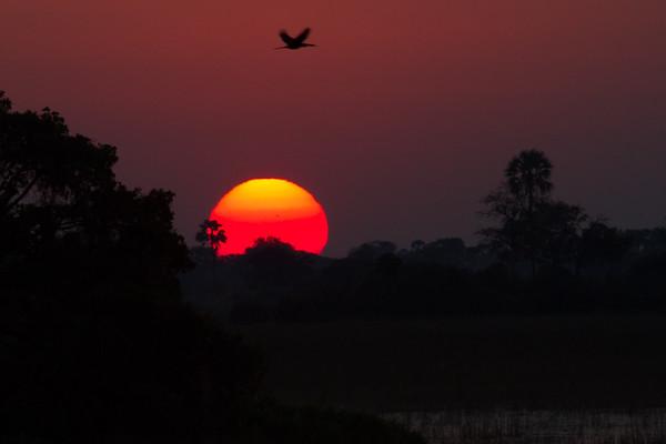 Sunset, Pelo camp