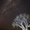 Lit Baobab tree