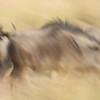 Wildebeest pan