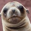 Sea Lion close-up