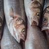 The Choir<br /> Turkish fish market
