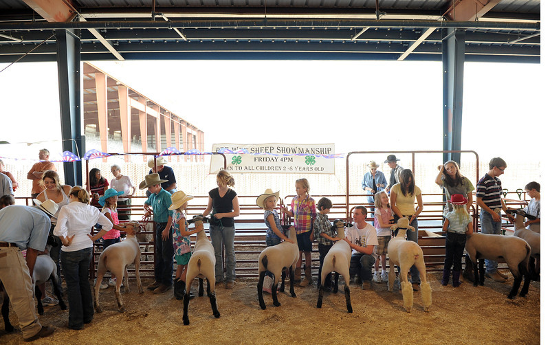 20110805_FAIR_SHEEP_7