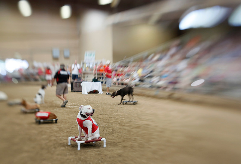 BOCO_FAIR_DOG_SHOW