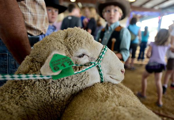 Boulder County Fair