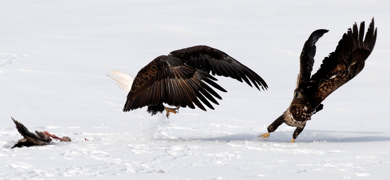 20100113_BALD_EAGLES_UNION_RESERVOIR