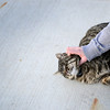 Maddie Precht pets a cat named Elmer, Tuesday, Jan. 8, 2013, in Longmont.<br /> (Matthew Jonas/Times-Call)