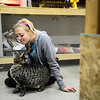 Maddie Precht pets an adopted barn cat named Elmer inside their garage, Tuesday, Jan. 8, 2013, in Longmont.<br /> (Matthew Jonas/Times-Call)
