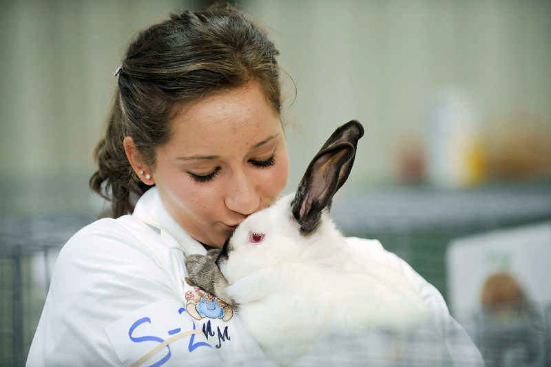 20100803_FAIR_RABBITS_1