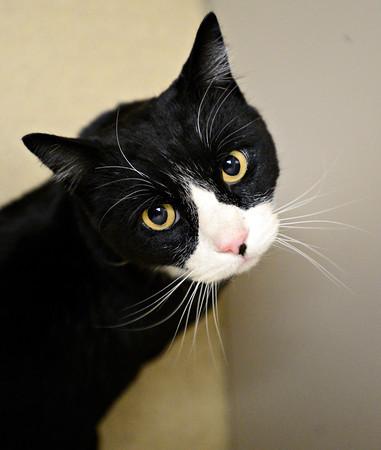 Cross Country Cat