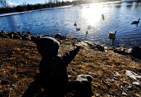 Connor Calkins, 3, tosses pinecones to geese in the pond at Loomiller Park on Monday, March 4, 2013, with his brother, Liam, and mother, Melissa, not pictured.<br /> (Greg Lindstrom/Times-Call)