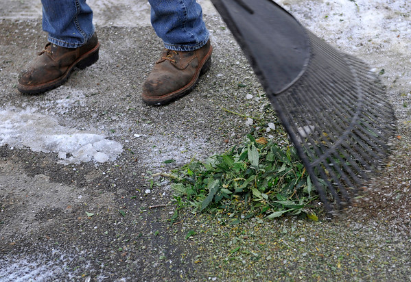 Nathan Sewolt, of A-1 Natural Arbor Care, sweeps up remaining shreds of medical marijuana, Monday, Dec. 31, 2012, outside Dacono Meds. Dacono Meds ceased providing medical marijuana and destroyed remaining plants to comply with a Dacono city wide dispensary ban. <br /> (Matthew Jonas/Times-Call)