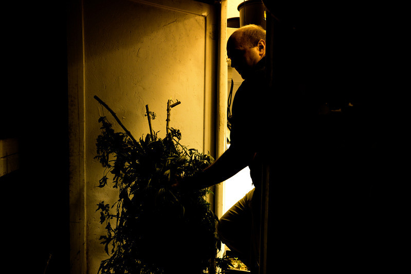Dacono Meds owner Brad Henson walks out of a grow room after cutting medical marijuana plants to be shredded, Monday, Dec. 31, 2012, outside his dispensary. Dacono Meds ceased providing medical marijuana and destroyed remaining plants to comply with a Dacono city wide dispensary ban. <br /> (Matthew Jonas/Times-Call)
