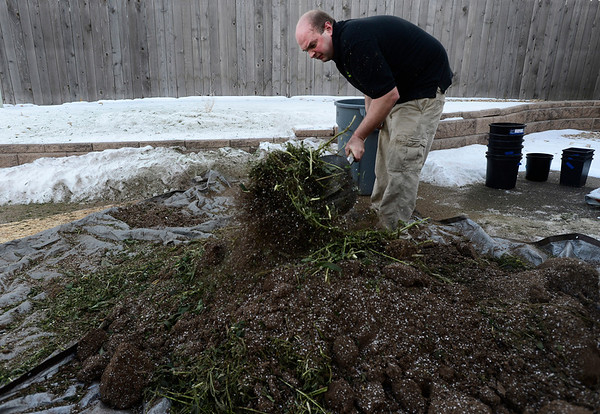 Dacono Meds owner Brad Henson churns shredded medical marijuana plants into dirt before disposing of it, Monday, Dec. 31, 2012. Dacono Meds ceased providing medical marijuana and destroyed remaining plants to comply with a Dacono city wide dispensary ban. <br /> (Matthew Jonas/Times-Call)