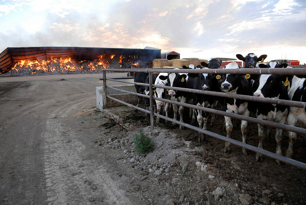 20100804_RMH_FIRE_DOCHEFF_DAIRY