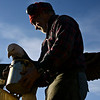 """Lueb Popoff, of Hollow Log Tree Carving and Sculpture, puts a coat of Danish oil on an eagle carving in the yard at 631 Independence Dr. in Longmont on Monday, Jan. 7, 2013. For more photos and a video visit  <a href=""""http://www.TimesCall.com"""">http://www.TimesCall.com</a>. <br /> (Greg Lindstrom/Times-Call)"""