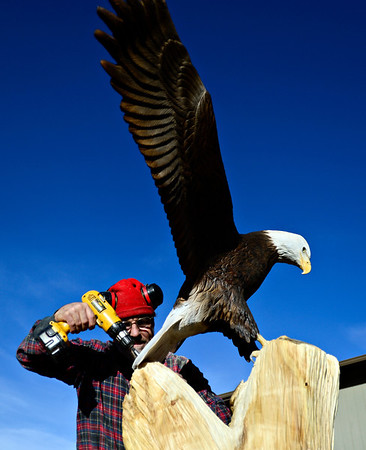 """Lueb Popoff, of Hollow Log Tree Carving and Sculpture, attaches his eagle sculpture to a dead cottonwood tree in the yard at 631 Independence Dr. in Longmont on Monday, Jan. 7, 2013. For more photos and a video visit  <a href=""""http://www.TimesCall.com"""">http://www.TimesCall.com</a>. <br /> (Greg Lindstrom/Times-Call)"""