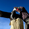 """Lueb Popoff, of Hollow Log Tree Carving and Sculpture, sets his eagle carving on top of a dead cottonwood tree in the yard at 631 Independence Dr. in Longmont on Monday, Jan. 7, 2013. The eagle was carved out of laminated basswood. For more photos and a video visit  <a href=""""http://www.TimesCall.com"""">http://www.TimesCall.com</a>. <br /> (Greg Lindstrom/Times-Call)"""
