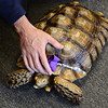 """20121121_TURTLE_038.jpg Robin Rockley pets Lucy the tortoise during a book signing event at Rockley Arts in Westminster on Wednesday, Nov. 21, 2012. For more photos visit  <a href=""""http://www.TimesCall.com"""">http://www.TimesCall.com</a>.<br /> (Greg Lindstrom/Times-Call)"""