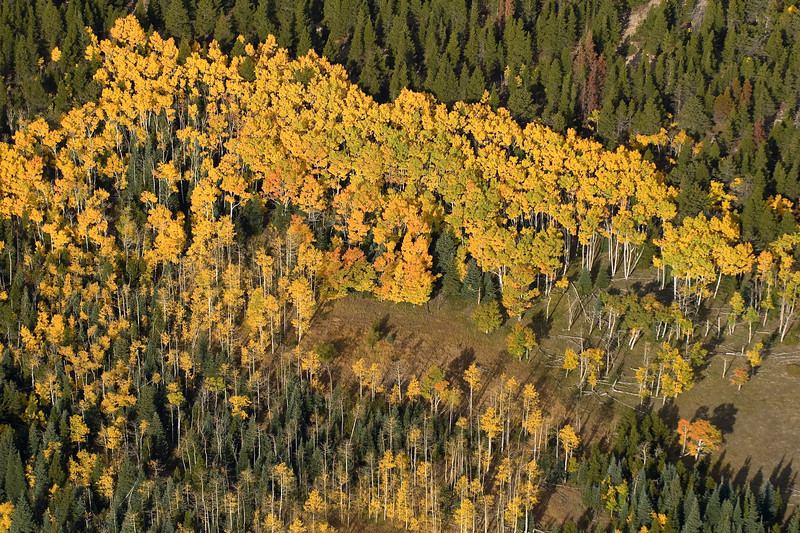 20081002_AERIAL_ASPEN_FALL_COLOR_5