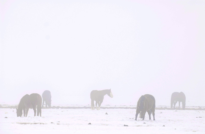 20070208_HORSES_FOG