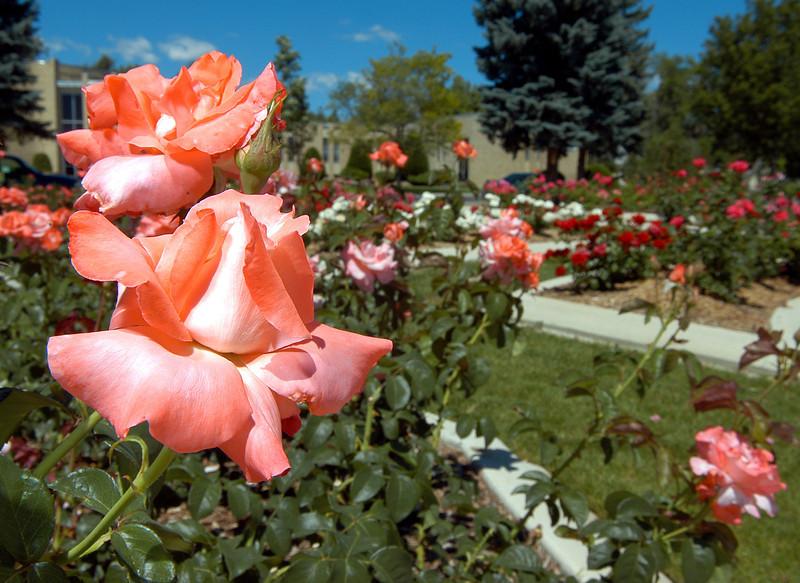 20060617_FILE_ROSE_GARDEN