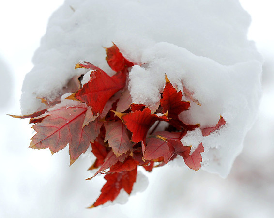 20091029_SNOW_LEAVES