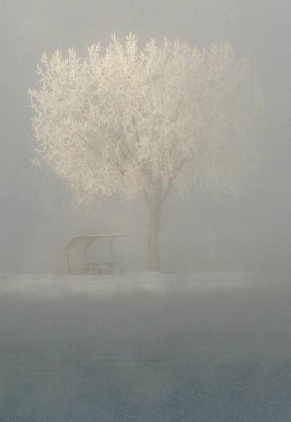 20041130_SNOW_COTTONWOODS_1