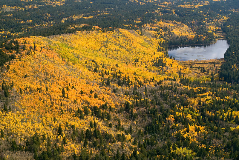 20081002_AERIAL_ASPEN_FALL_COLOR_3