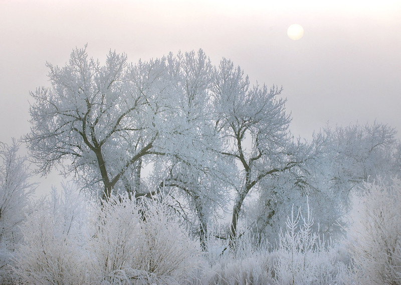 20041130_SNOW_COTTONWOODS_2