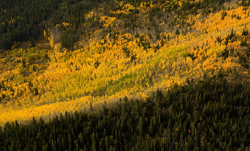 20081002_AERIAL_ASPEN_FALL_COLOR_4