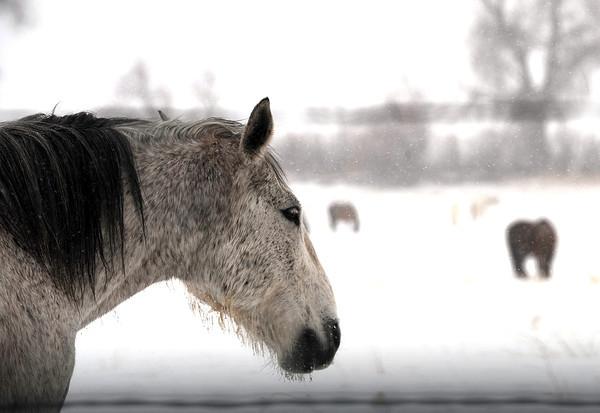 20090326_SNOW_JB_8