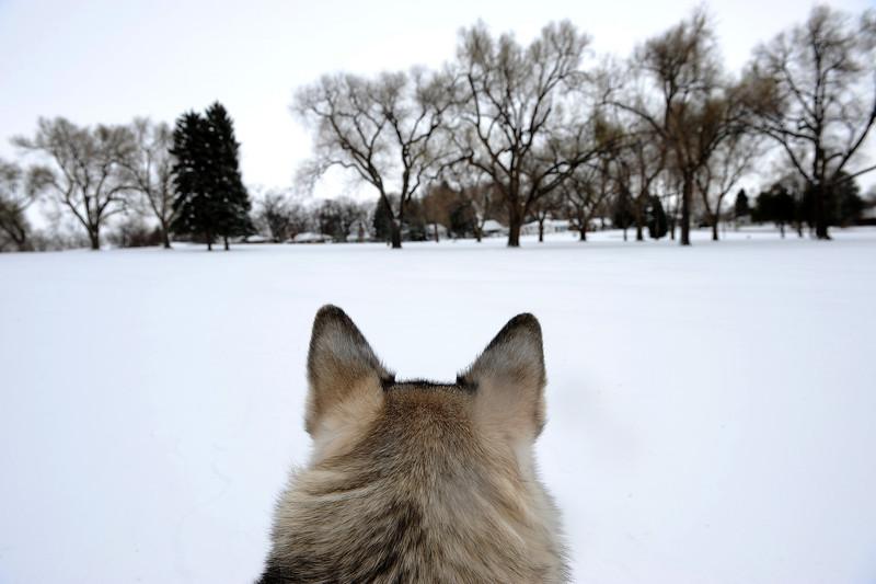 20090326_SNOW_JB_3