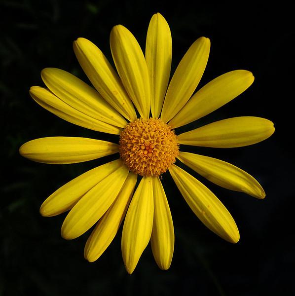 20050311_FLOWERS_3