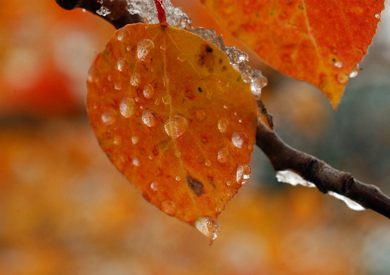 20040921_FALL_IMAGES_PUNCH_LEAVES