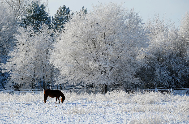 20090211_SNOW_WEATHER_FEATURES_HORSE_RODGERS
