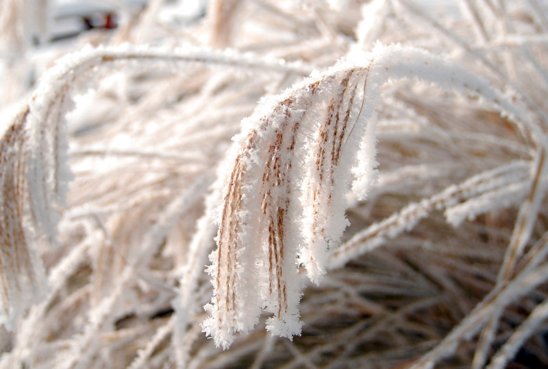 20111202_FROST_5
