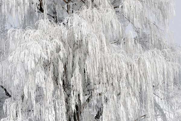 20111202_FROST_3