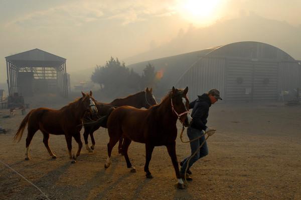 20090106_WILDFIRE_HORSES