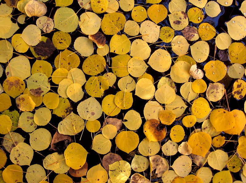 20060930_IMAGES_FALL_AUTUMN_LEAVES