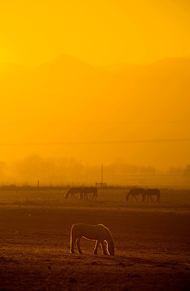 20081119_HORSES
