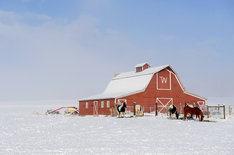20090211_SNOW_WEATHER_FEATURE_HORSES_BARN